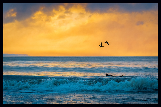 Birds flying over surfer