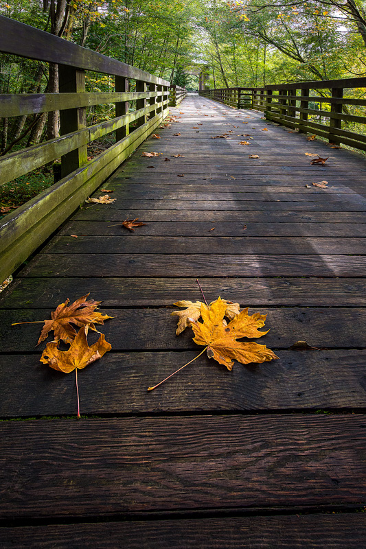 sequim, railroad, park, bridge, fall, leaves, orange, boardwalk, washington, olympic, peninsula, pacific, northwest