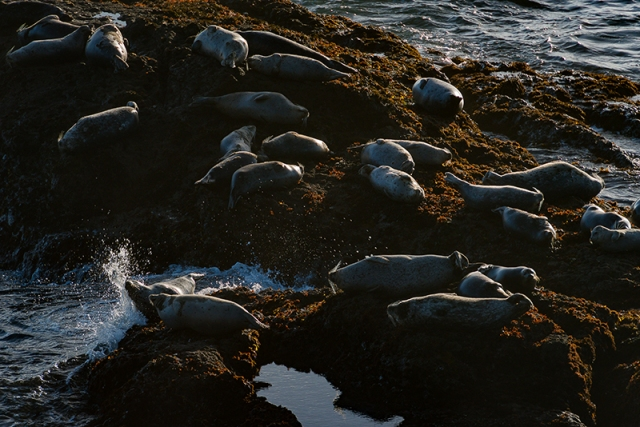 seals-sunning-4w